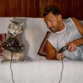 игры с котом